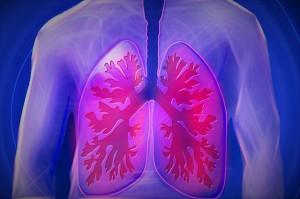 Besser leben - die Lunge des Menschen (schematisch)